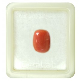 Certified Red Coral Premium 9+ 5.8ct